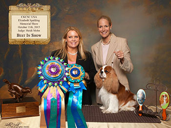 Heidi judging at a CKCSC-USA show